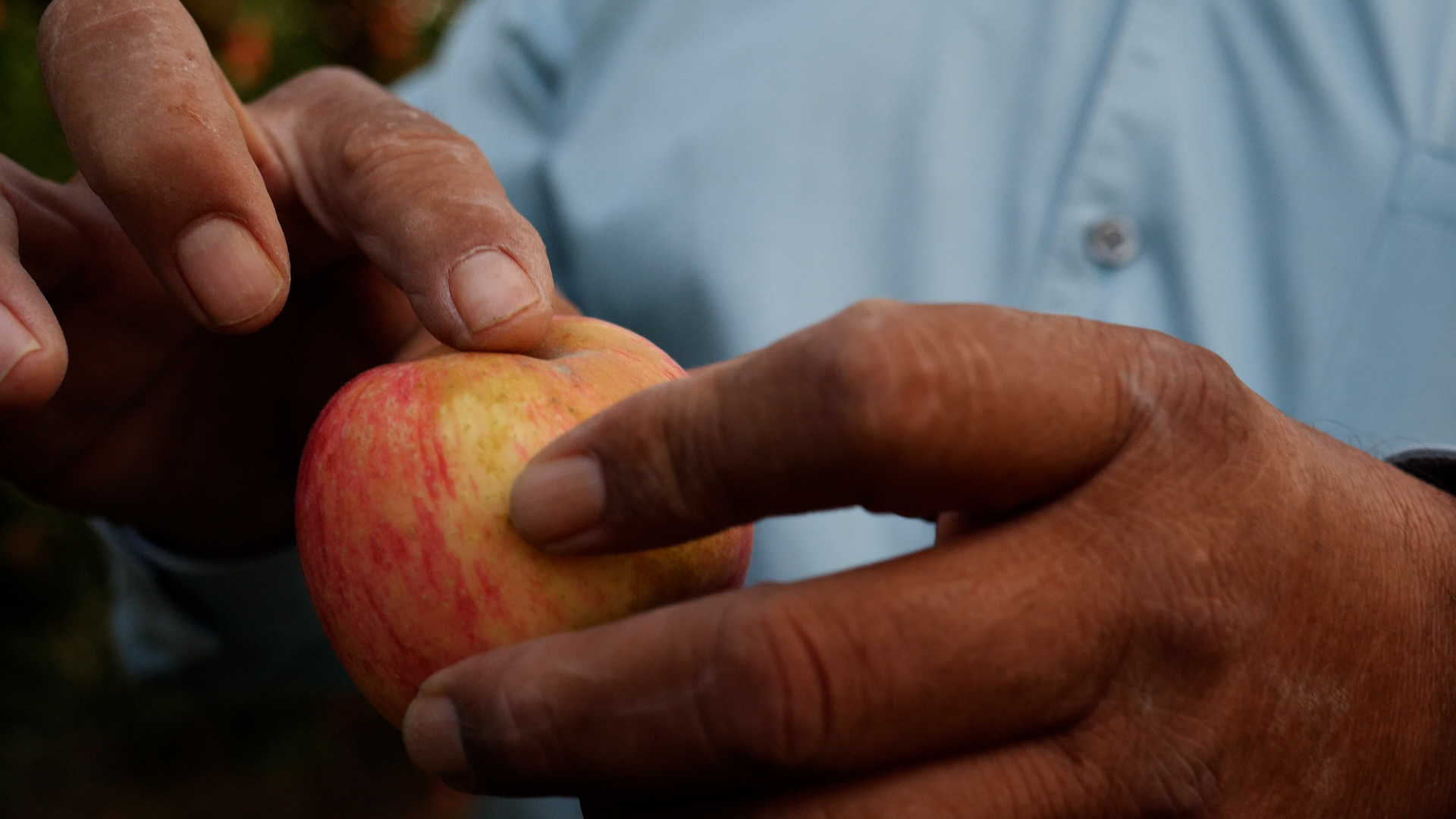 A close up of hands holding an apple